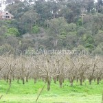 Pettys Orchard Apple farm Melbourne