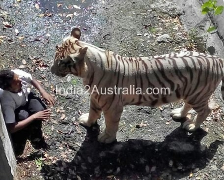 Mangalyan and India's White Tiger moment of shame