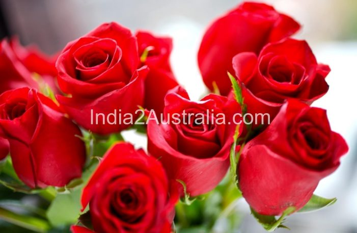 Roses and Rose diseases
