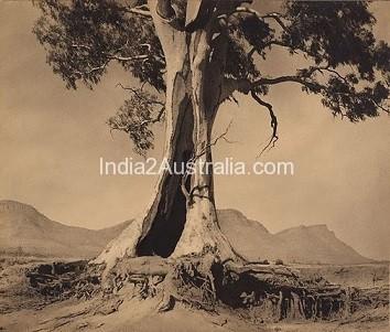 Australia and Gum Tree