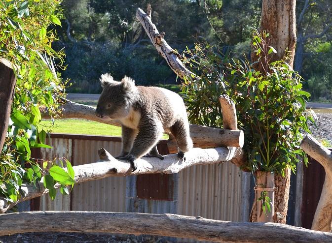 Werribee open range zoo2