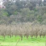 Pettys Orchard Apple farm Melbourne