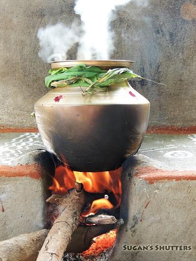 preparing pongal