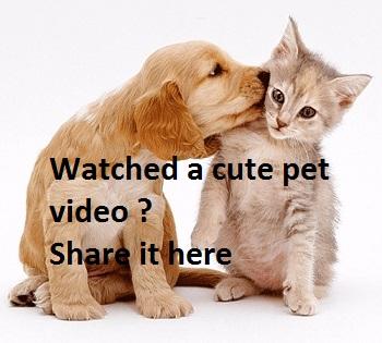 Cute-Pets